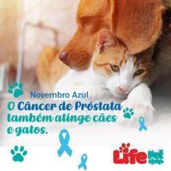 cancer de prostata em caes e gatos