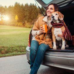 Dicas para viajar de carro com seu pet